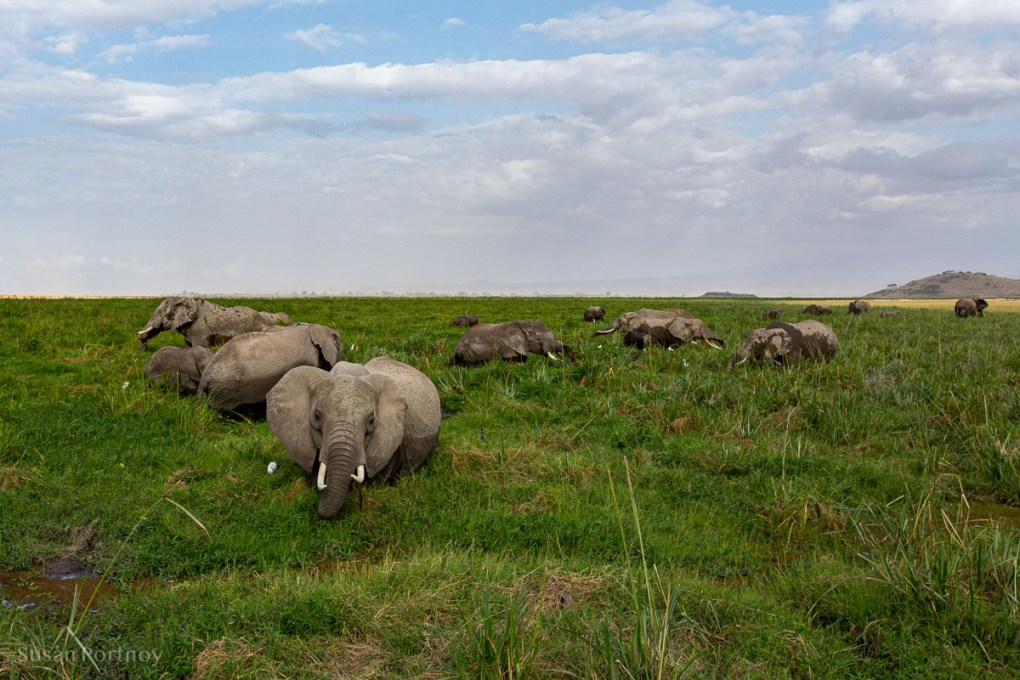 Herd of elephants chin deep in a swamp