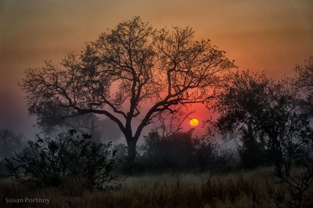 Timbavati landscape, South Africa