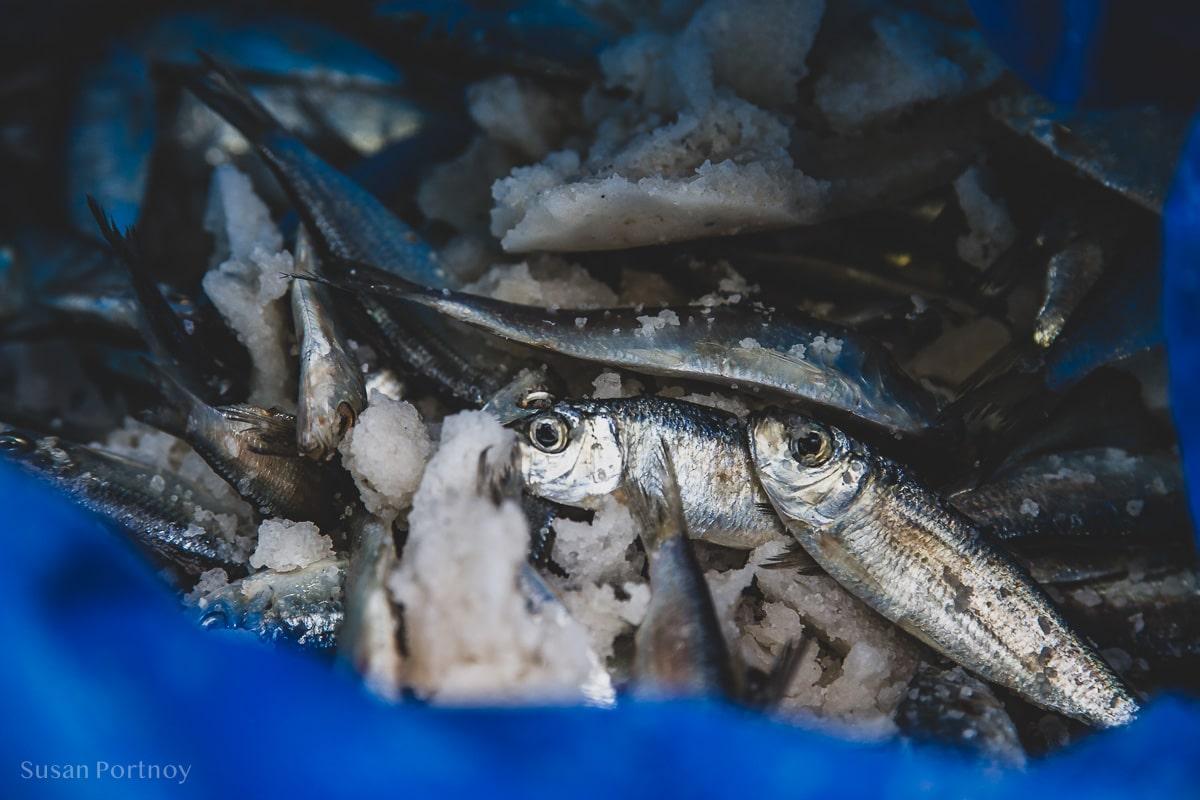 Sardines in a bag in Cojimar, Cuba