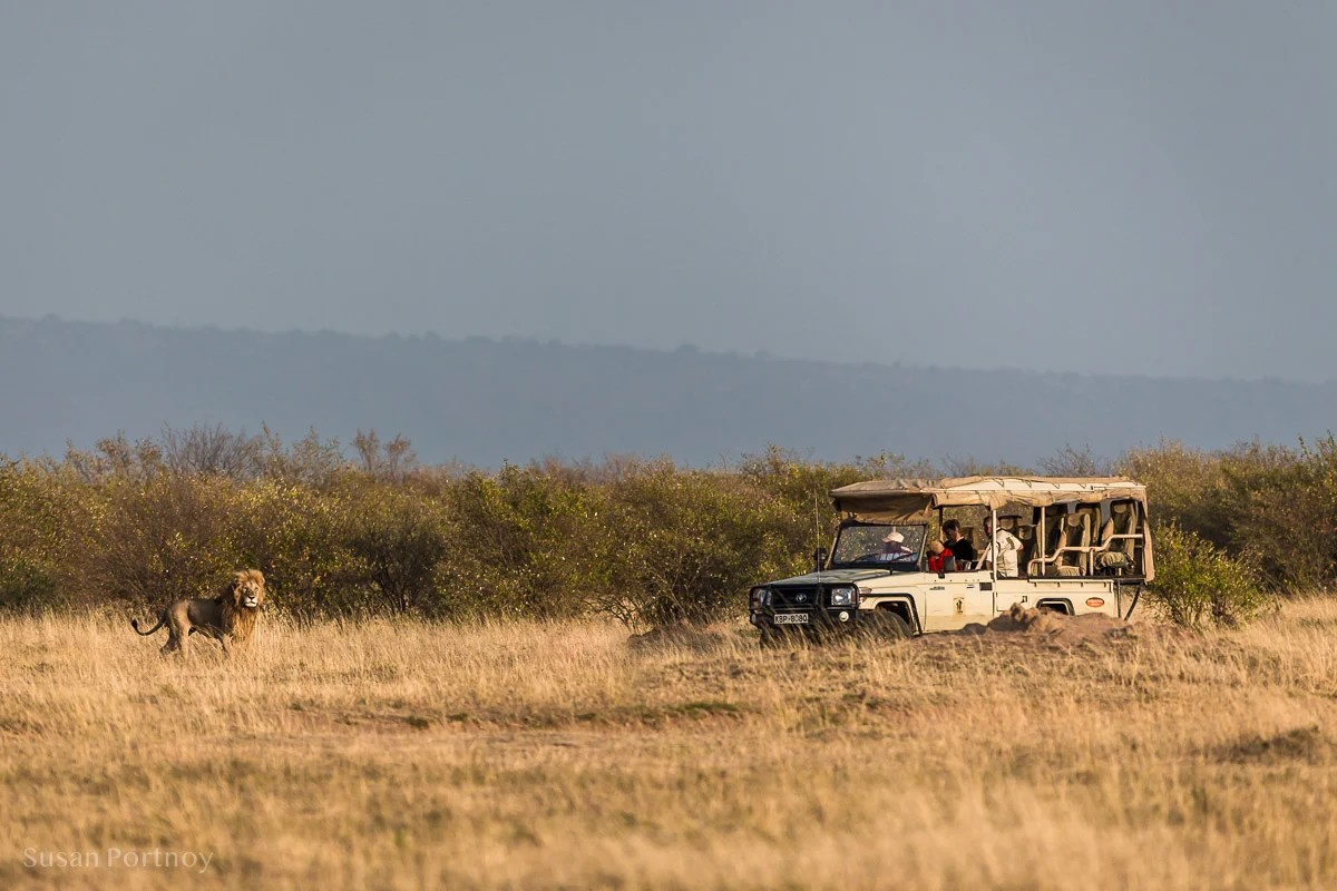 Jeep in the Masai Mara lion is in front -safari Packing List