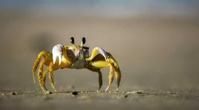 Buy Premium King Crab Legs Online at Cheap Rates