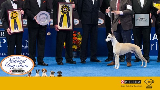 2020 National Dog Show on Thanksgiving