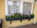 windowboxes by sheila gail landgraf