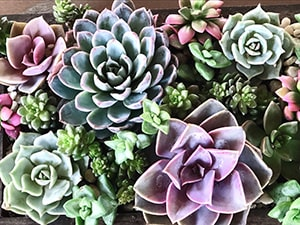 Inspired Garden Maplewood New Jersey succulents example