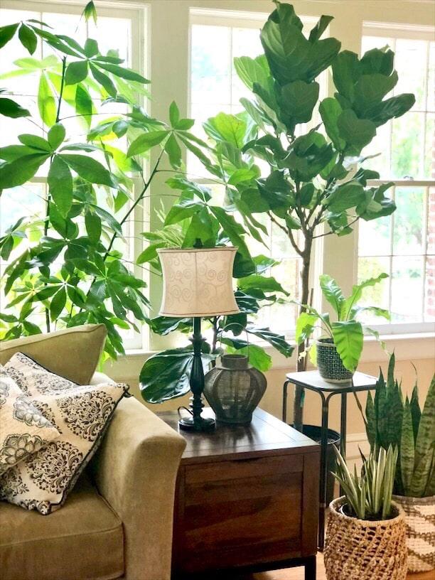 indoor botanicals example by Inspired Garden Maplewood New Jersey