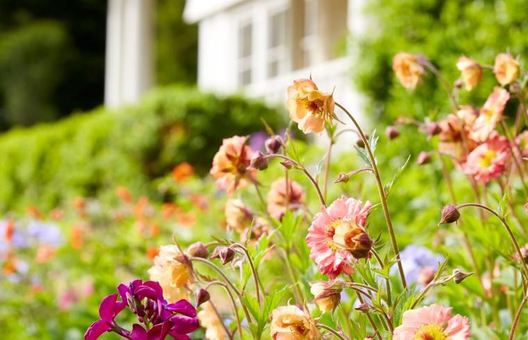 flowers at custom home garden by The Inspired Garden