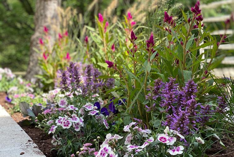 Fall European Garden flowers in concrete planters client story Short Hills New Jersey