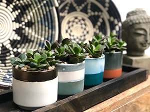 potted plants for online store button
