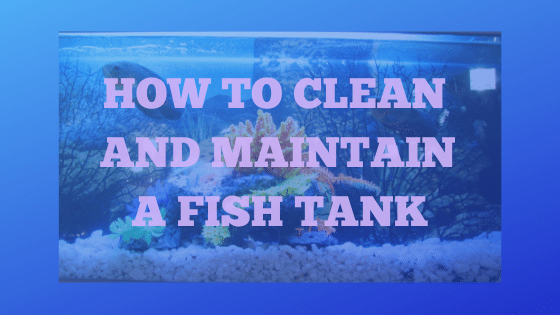 How To Clean And Maintain A Fish Tank