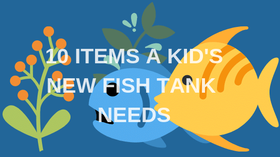 What Are 10 Things A Kid's New Fish Tank Needs?
