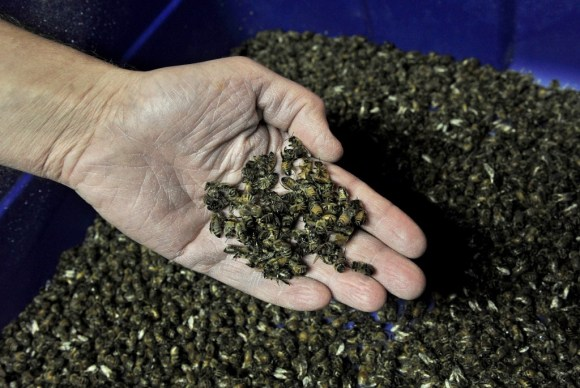 BROOKINGS,SD-JAN 11:  Entomologist Jonathan Lundgren is a USDA scientist who is struggling to get out his research that may provide some answers to the dwindling honey bee population. (Photo by Michael S. Williamson/The Washington Post via Getty Images)