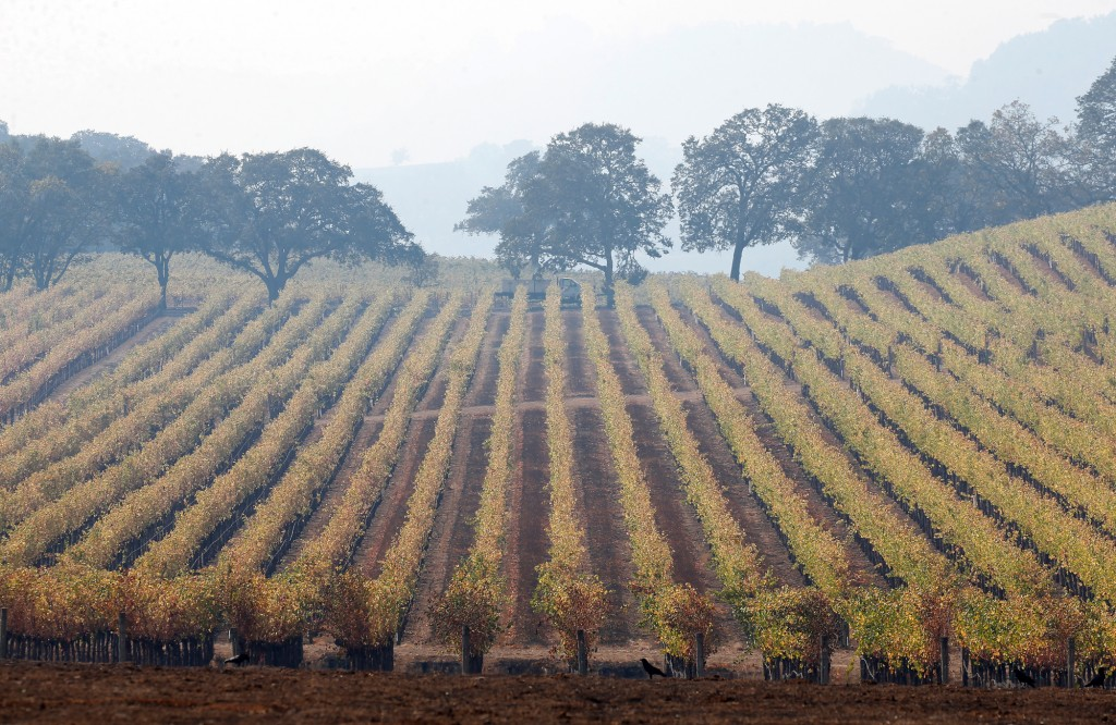 Smoke hangs over the Fieldstone Winery vineyard along Hwy. 128 after the Kincade Fire in Healdsburg, Calif., on Oct. 28, 2019.