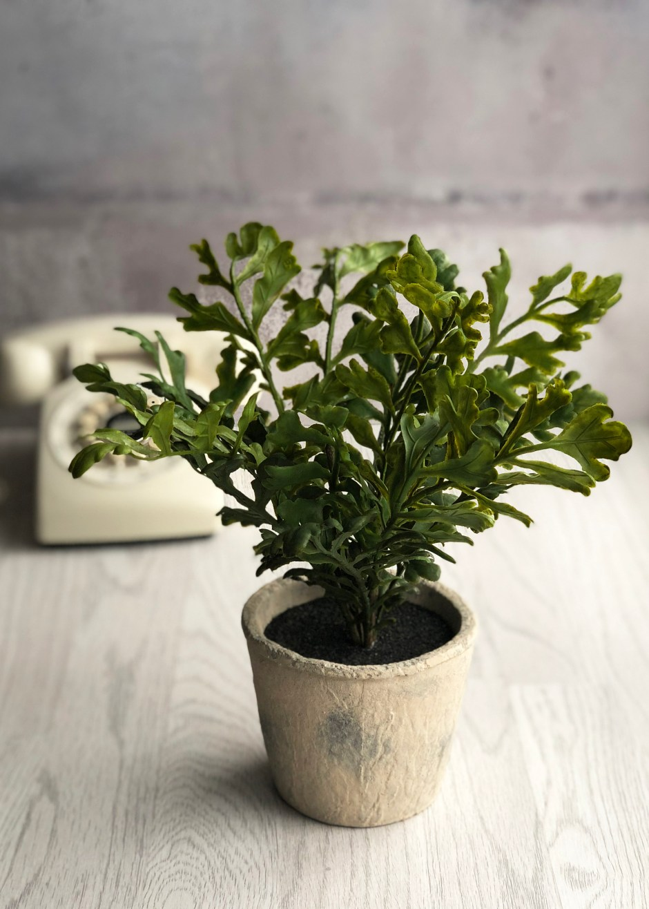 The Great Faux Plant Home Trend