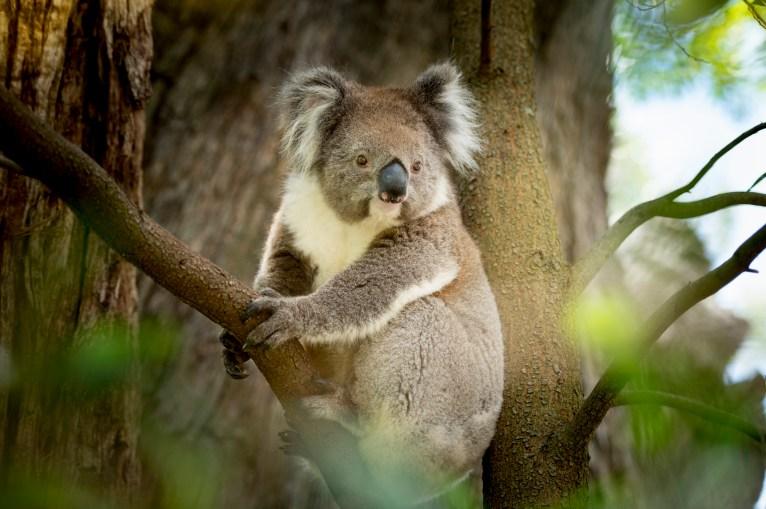 Kangaroo Island has much more than Kangaroos