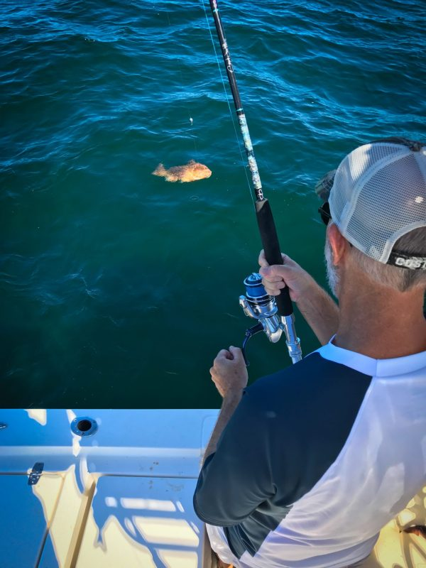 Angler Landing a Live Bait Caught Keeper Red Grouper.