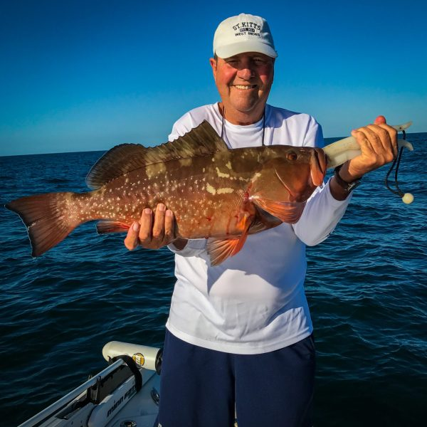 Chunky Red Grouper Caught in 50' Off Sanibel Island.