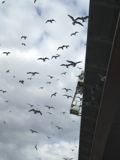 birds off the boat