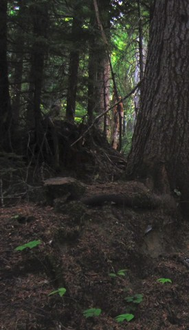 Davokar-Symbaroum-Dark-Forest