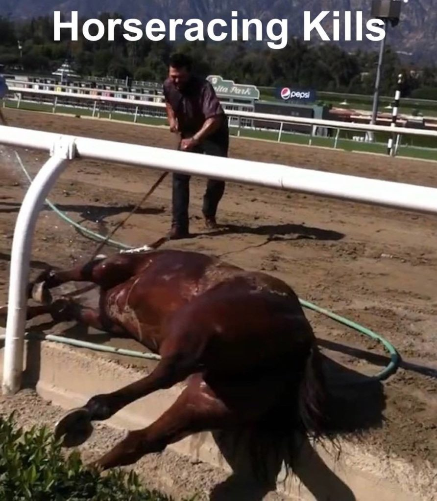 Largest Horse Racing Protest In History Their Turn