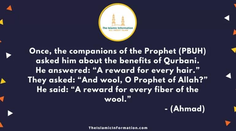 Qurbani (Zabihah) HADITHS