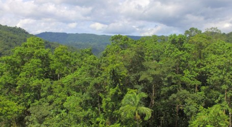 SI could lose natural forests by 2036: Report predicts
