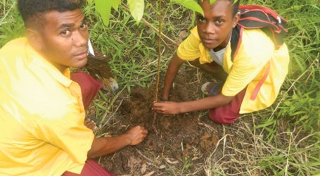 Malaita schools benefit from reforestation programme