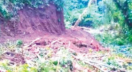 Serious logging problems