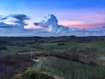 Scurzolengo vineyards