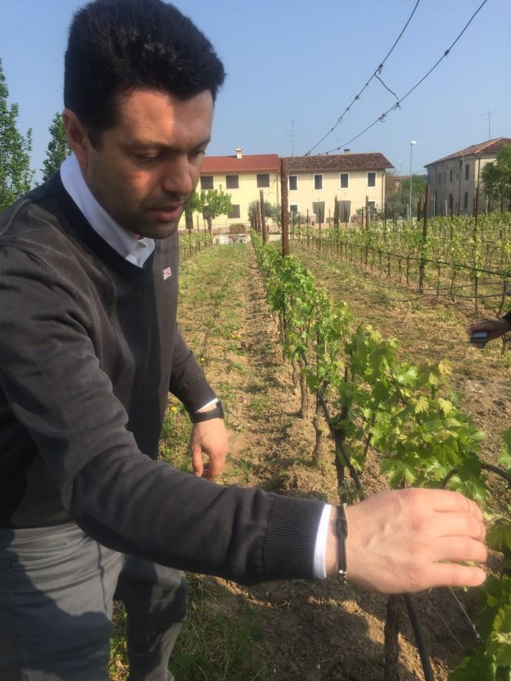 Fabio Zenato at Le Morette winery
