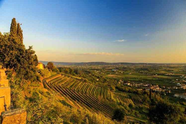 friuli_venezia_giulia_wine