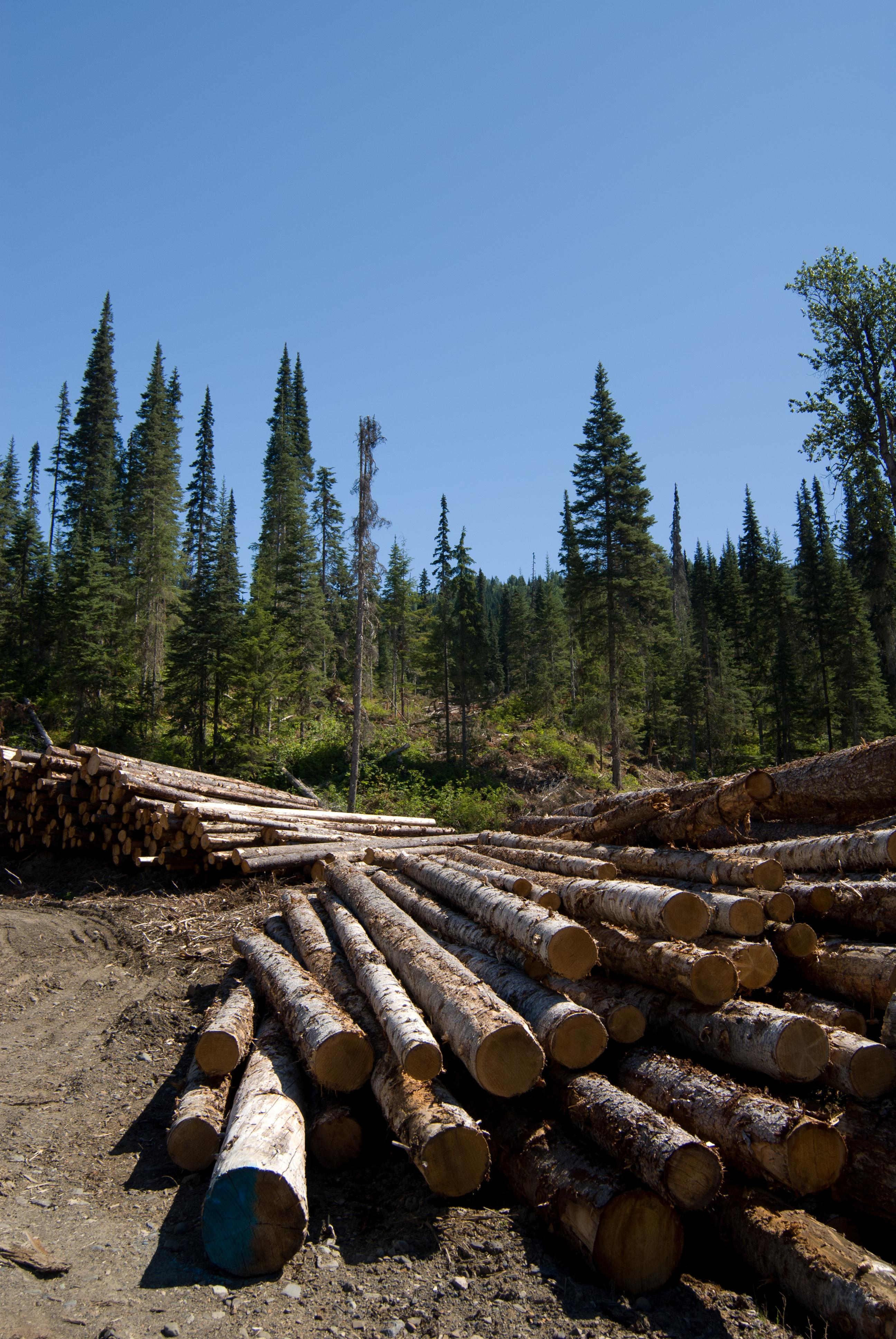 A Changing Forest Sector Globalization Triggers Bio