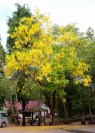 Love these yellow trees!