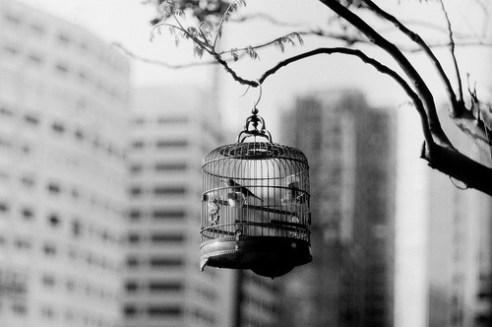 birds-black-and-white-cage-Favim.com-450547