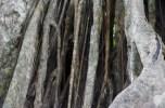 Tree's roots
