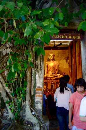 The temple inside the tree
