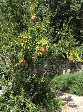 A pomegranate adds height and colour