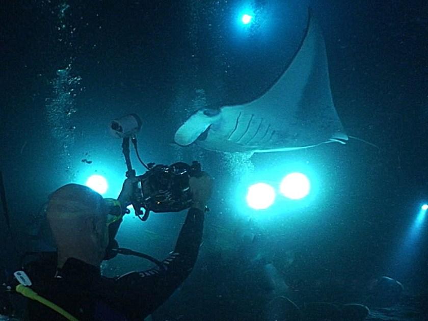 8 Best Big Island (Hawaii) Activities - Manta Ray night dive - http://thejerny.com