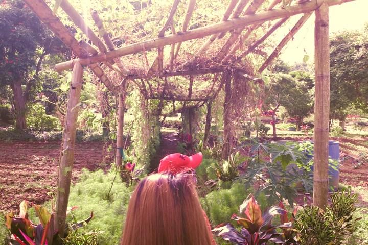 Paradizoo - Vegetable Garden - http://thejerny.com
