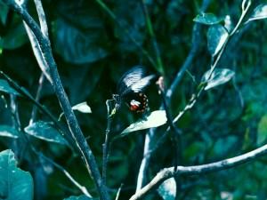Paradizoo - Butterfly Garden - http://thejerny.com