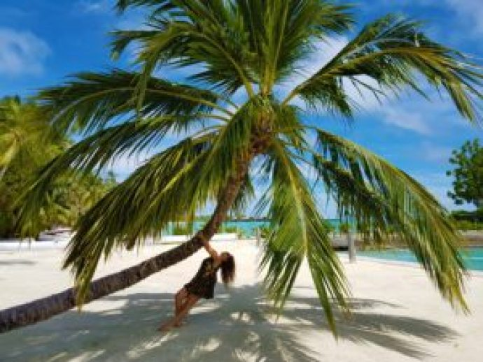 Coconut Tree Maldives Paradise