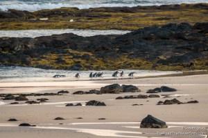 Penguin Parrade, Summerland Bay