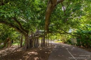 Banyan Tree, Botanic Gardens
