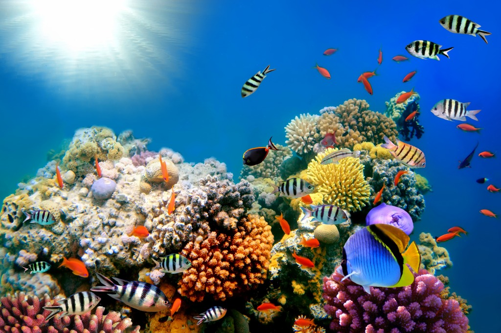 Bright Colors Of The Coral Reef Jigsaw Puzzle In Under The