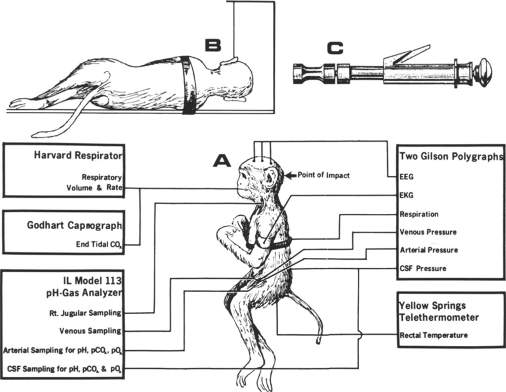 Respiration And The Cerebrospinal Fluid In Experimental