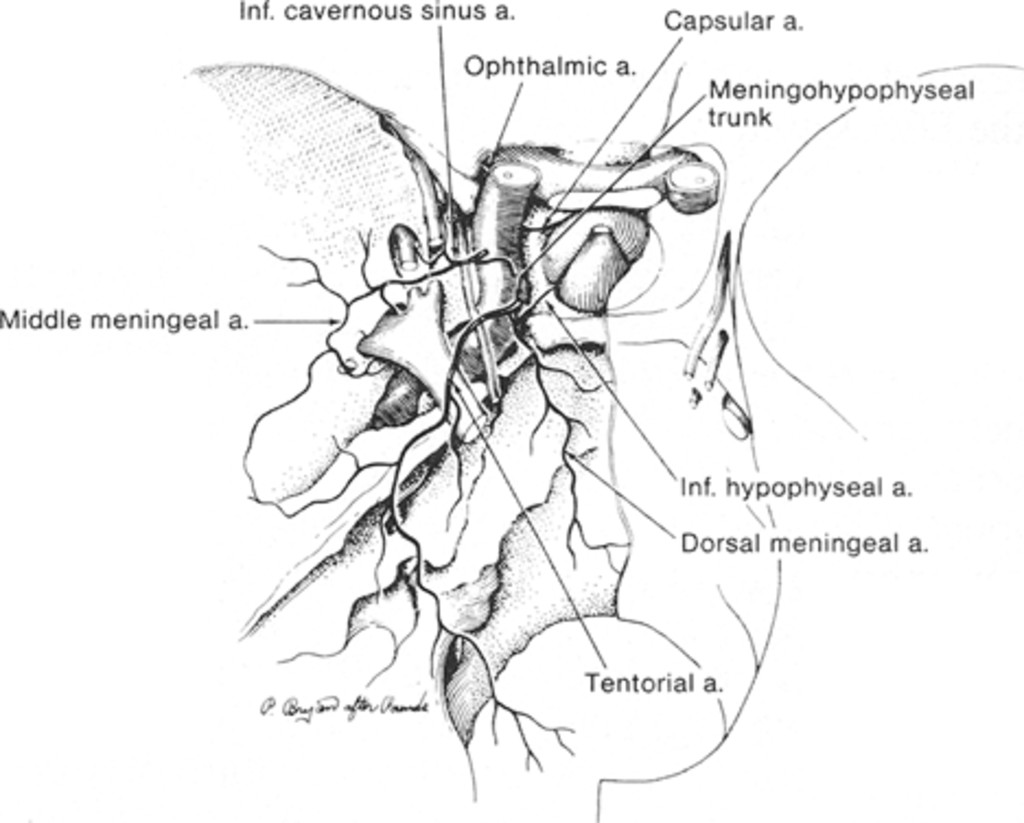 Classification And Treatment Of Spontaneous Carotid