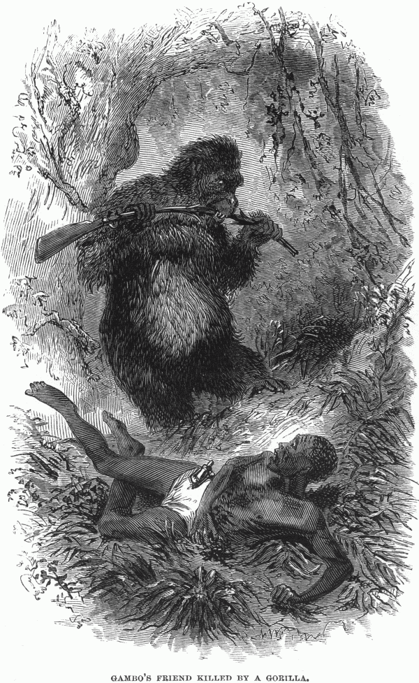 Killed by a Gorilla du Chaillu