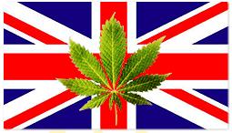 marijuana-england-uk