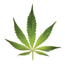 FEAT_MedicalMarijuana_potLeaf_99807060