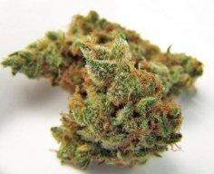 jilly-bean-medical-marijuana-weed-strain-thcf-jillybeanweed