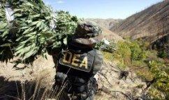 DEA-marijuana-eradication-300x168
